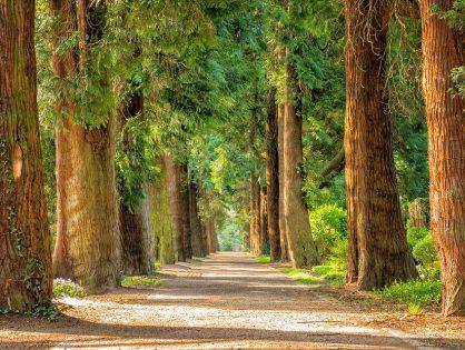 Los beneficios de un árbol