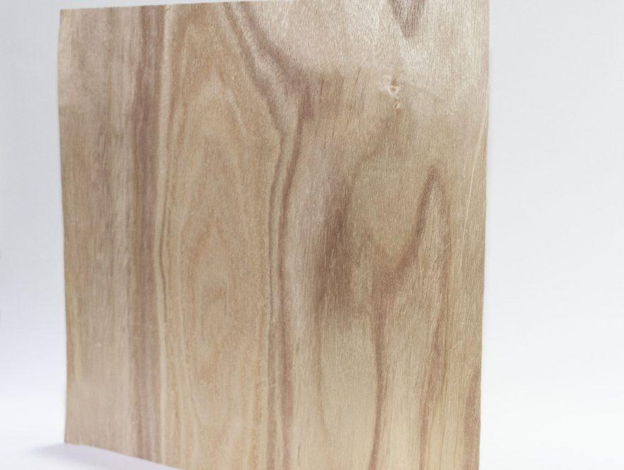 Chapa de madera de natural paulownia