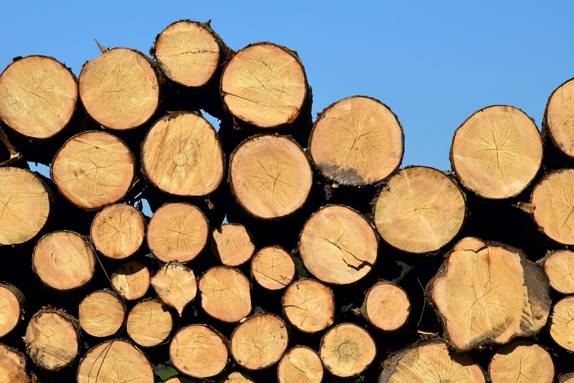 Tipos de madera más utilizadas y sus características