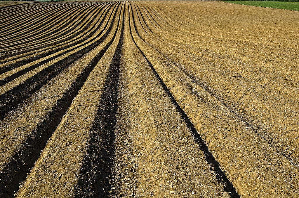campo preparado para plantar