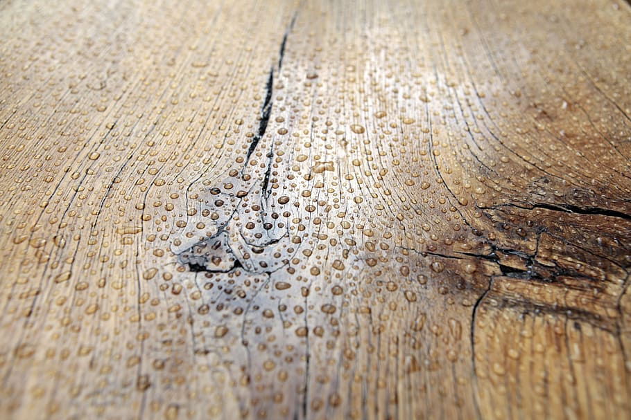 Higroscópicidad del tronco