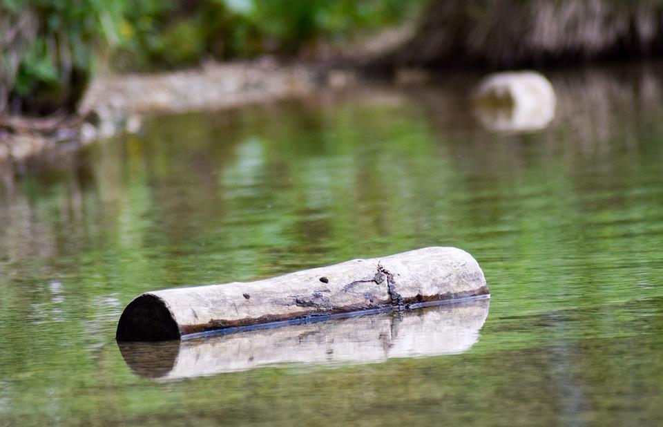 ¿Por qué flota la madera?