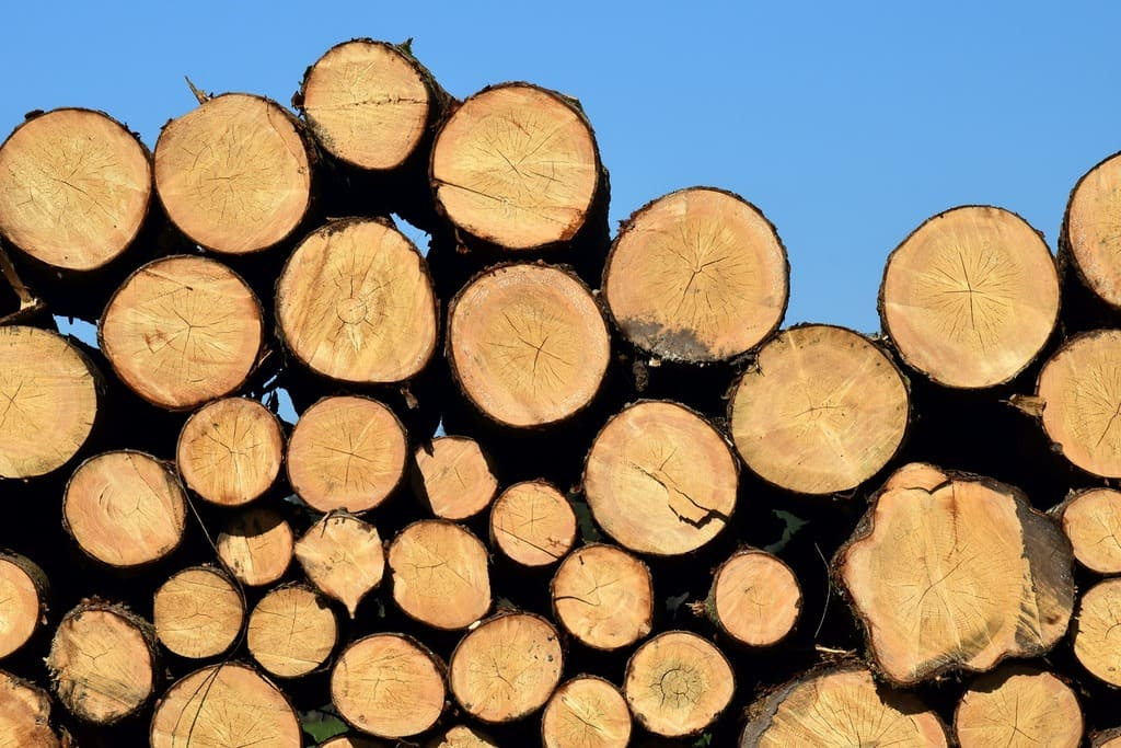 Madera en troncos