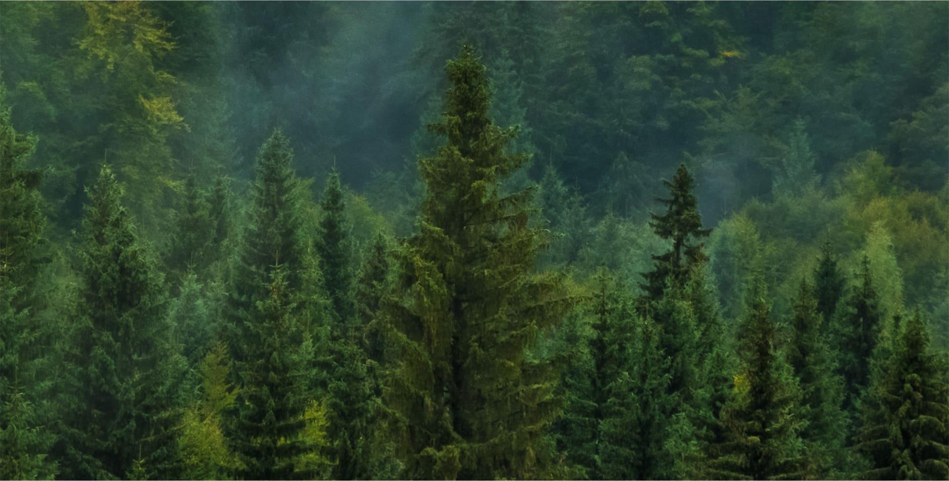 kiri forest