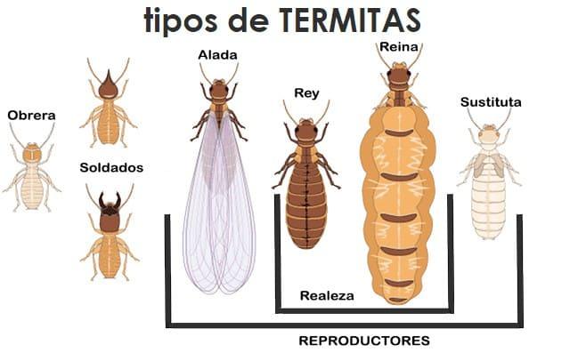 tipos-de-termitas